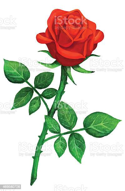 Watercolor red rose flower with leaves vector id469580726?b=1&k=6&m=469580726&s=612x612&h=mxxpjauhxa0t4te6aozyz52rapc6be2px zkblqouyo=