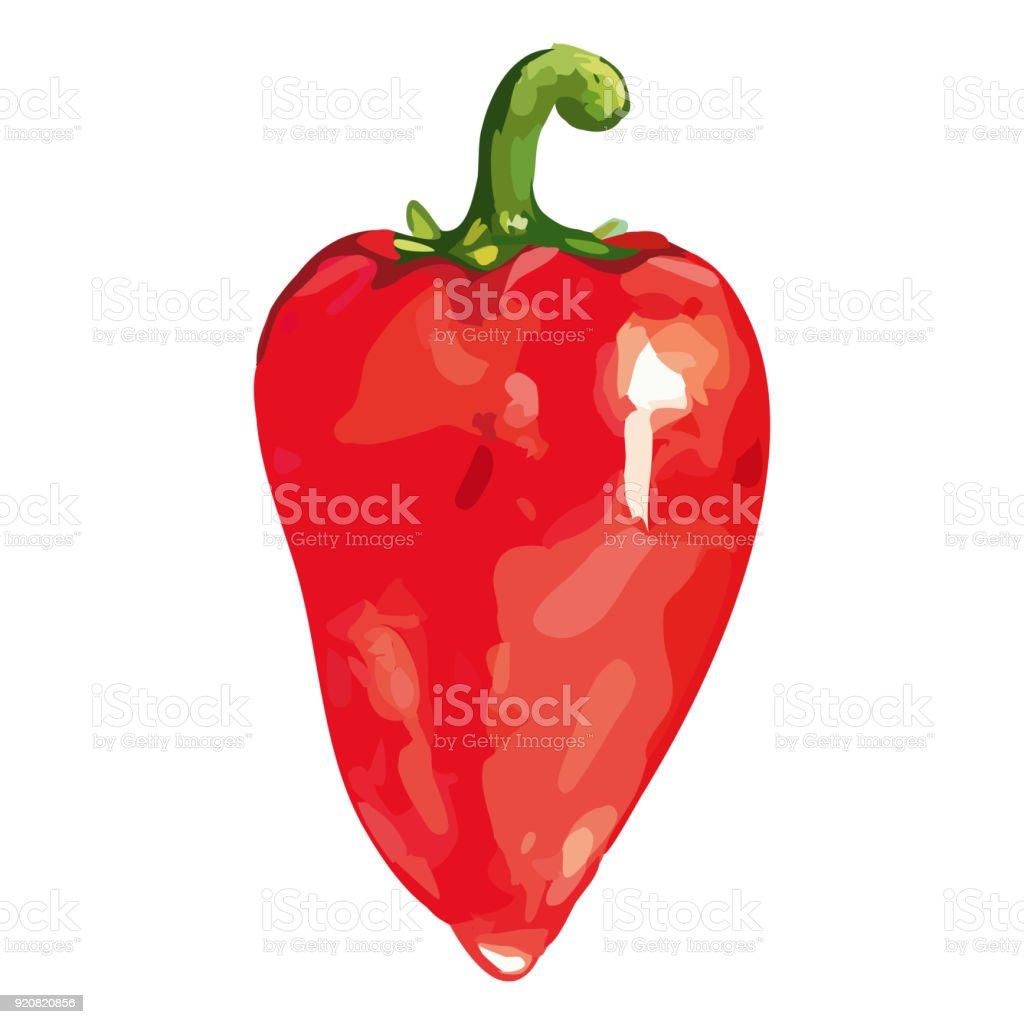 Suluboya Kırmızı Tatlı çan Bulgar Biber Sebze Izole Vektör Stok