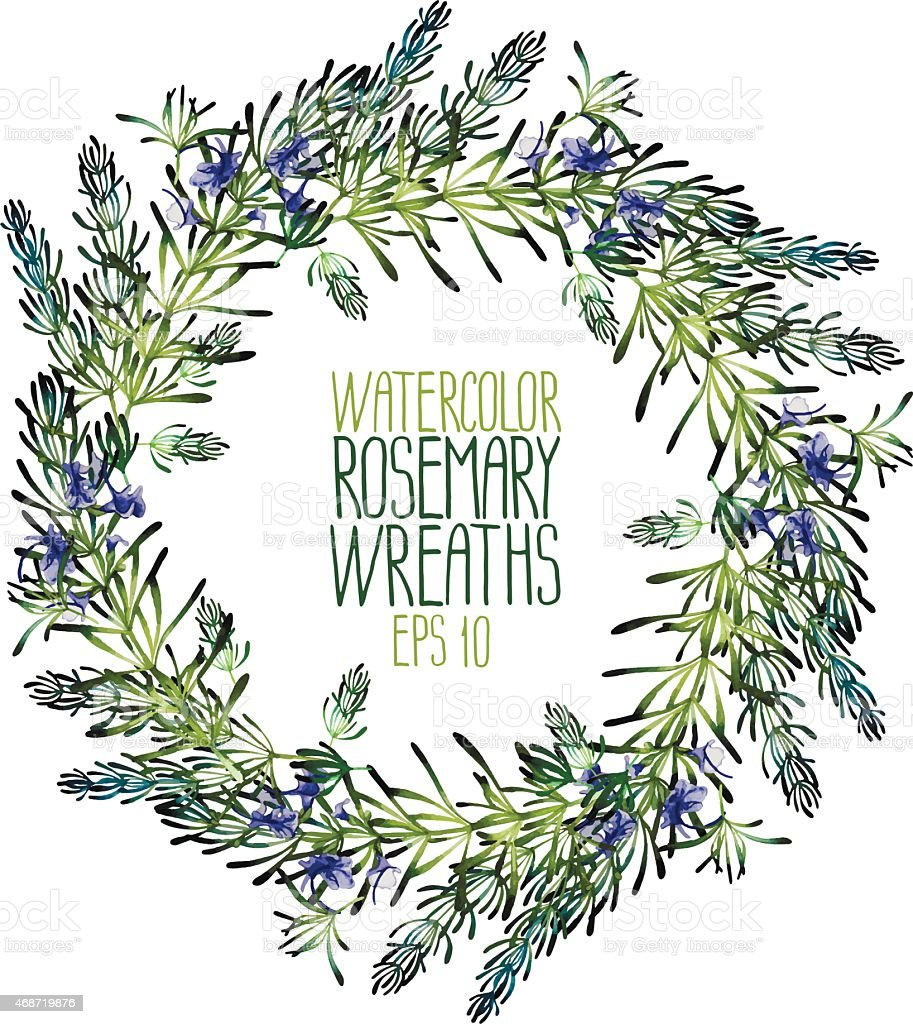 Watercolor rosemary wreath vector art illustration