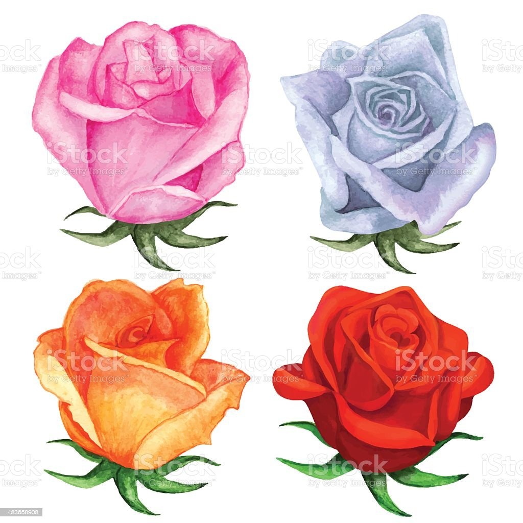 Watercolor Roses Flowers Pink Blue Red Orange Colors Stock Vector ...