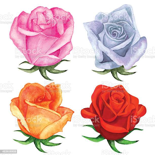 Watercolor roses flowers pink blue red orange colors vector id483658908?b=1&k=6&m=483658908&s=612x612&h=i iw2iwdage0mc fihjoftdhb3xykyx35mzptgpltme=