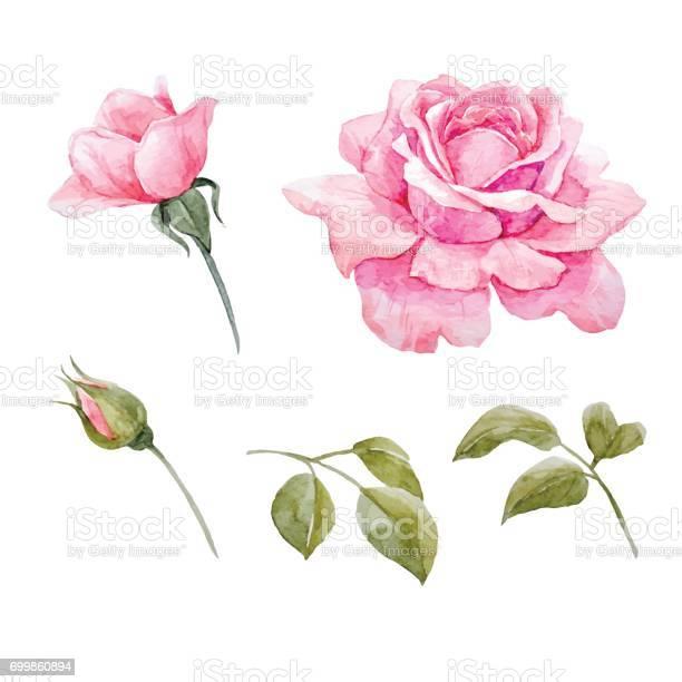 Watercolor roses vector set vector id699860894?b=1&k=6&m=699860894&s=612x612&h=e5b0bvk9ofcqd 6l2jyyga5p7aoaxpvm1ygt43tk0tc=