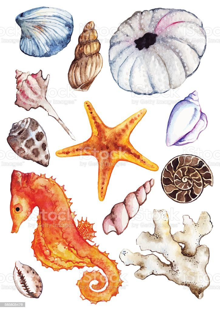 Watercolor sea ocean seahorse seashell coral ammonit urchin set vector vector art illustration