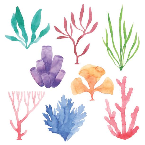 Watercolor Sea Plants Set Vector illustration of watercolor sea plants. coral colored stock illustrations