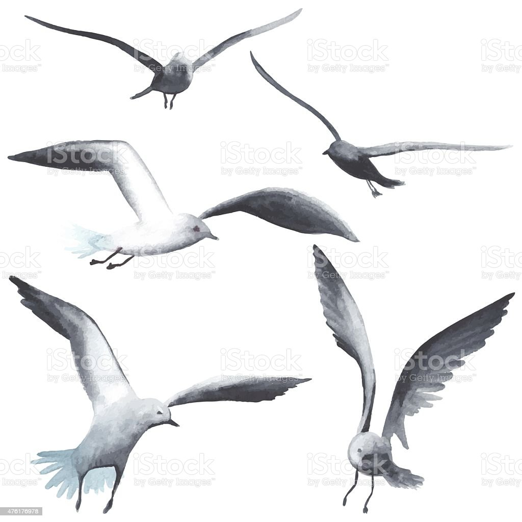 Watercolor seagull vector art illustration