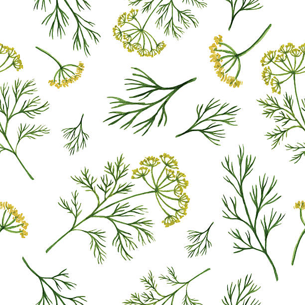 Watercolor seamless pattern hand drawn herb dill . Watercolor vector seamless pattern hand drawn herb dill . Watercolor leaves and branches of dill on a white background. Herbs for packaging design, cards, postcards and book illustrations. dill stock illustrations