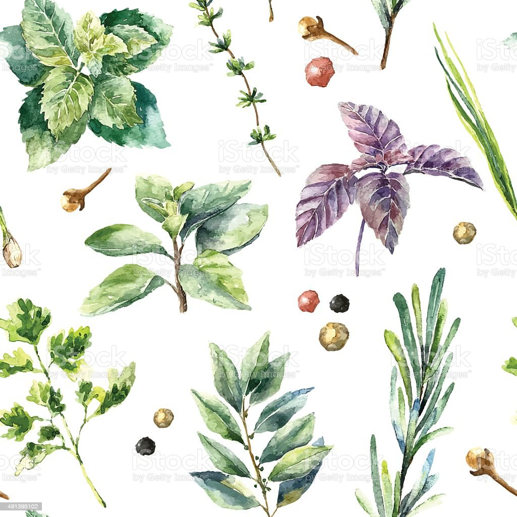 Watercolor seamless pattern of fresh herbs and spices isolated. vector art illustration