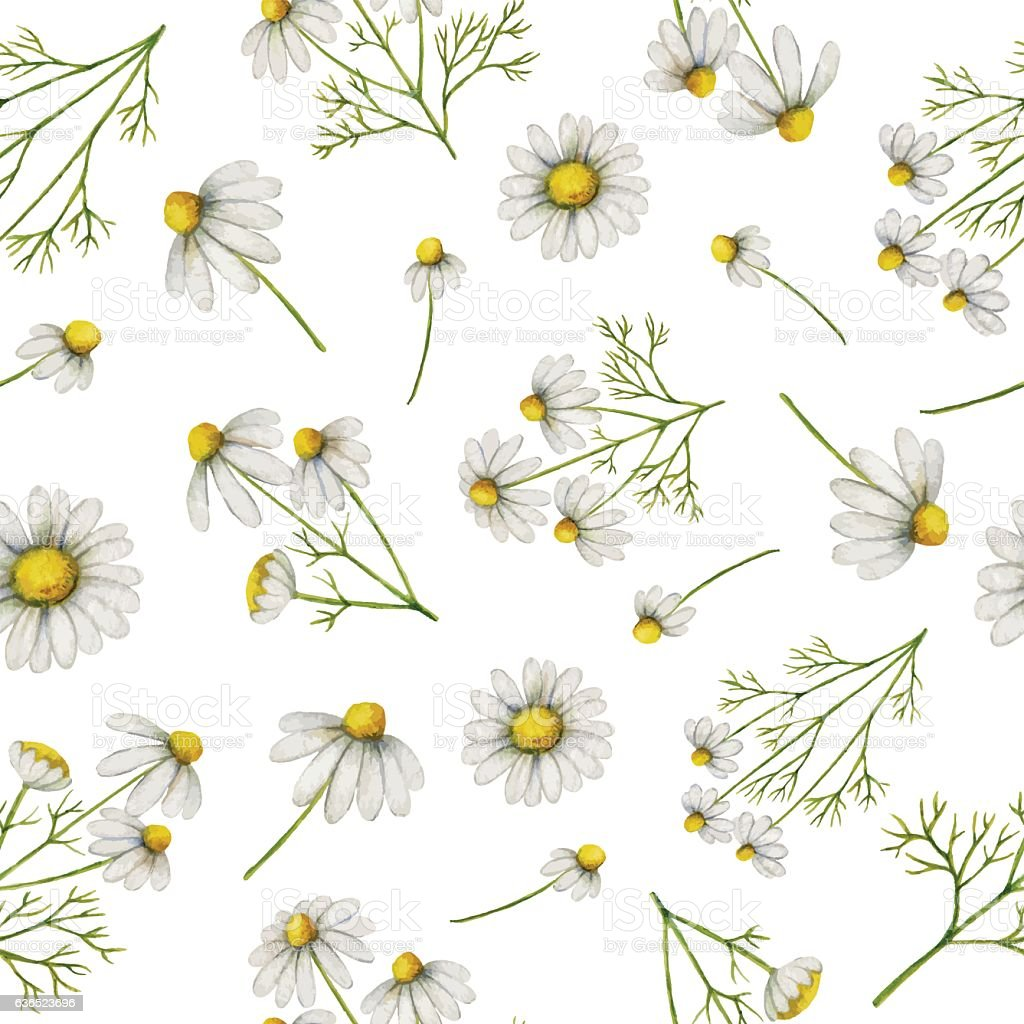 Watercolor seamless pattern with daisy flowers and branches. vector art illustration