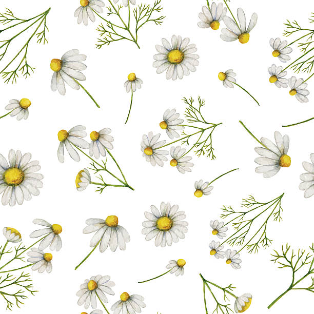 Watercolor seamless pattern with daisy flowers and branches. Watercolor seamless pattern with daisy flowers and branches. Vector background for textile, paper and other print and web projects. daisy stock illustrations