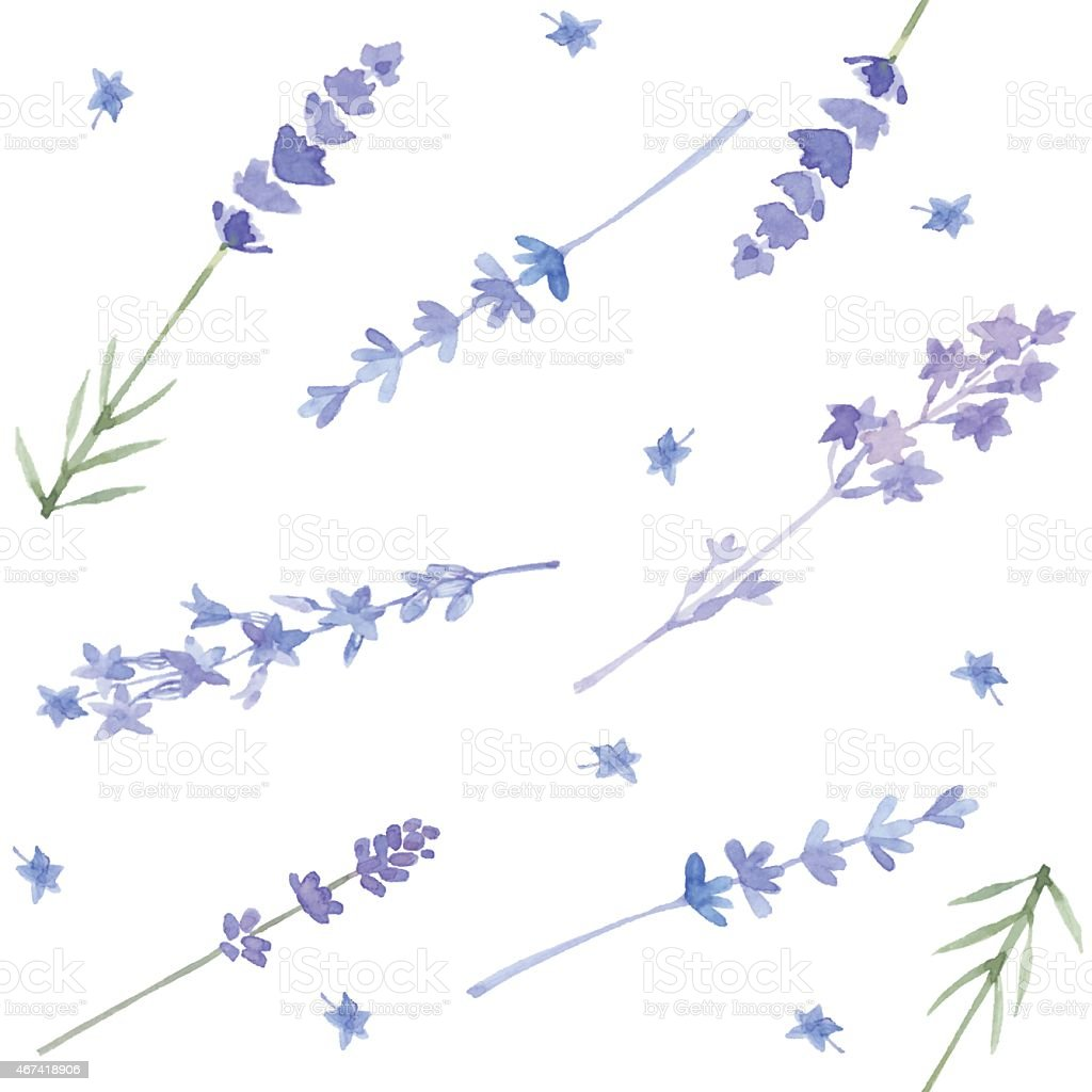 watercolor seamless pattern with lavender vector
