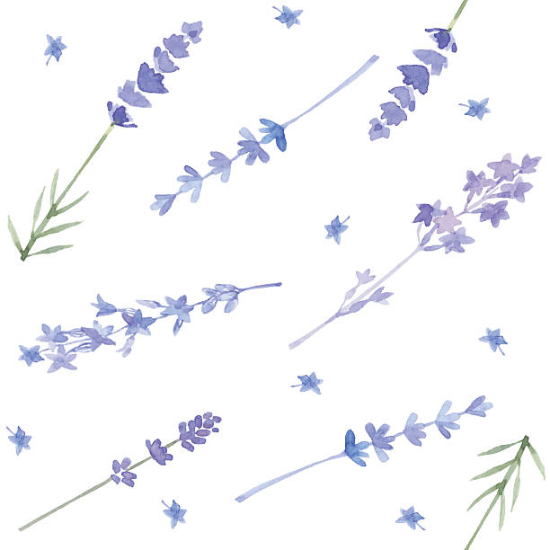 Watercolor seamless pattern with lavender. Vector background. Floral background with different lavender flowers  painted by watercolor. lavender color stock illustrations