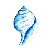 Seashell watercolor illustration. Hand drawn underwater element design. Artistic vector marine design element. Illustration for greeting cards, printing and other design projects.