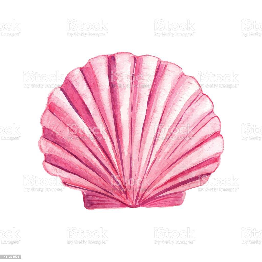 Watercolor Seashell vector art illustration