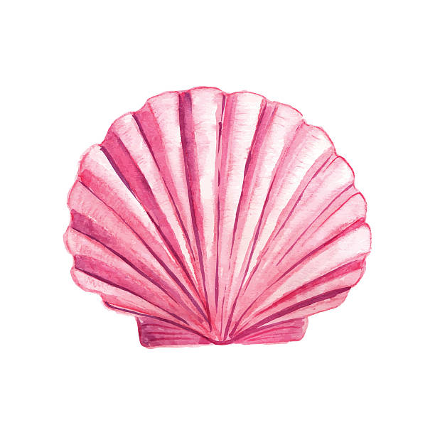 watercolor seashell - seashell stock illustrations, clip art, cartoons, & icons