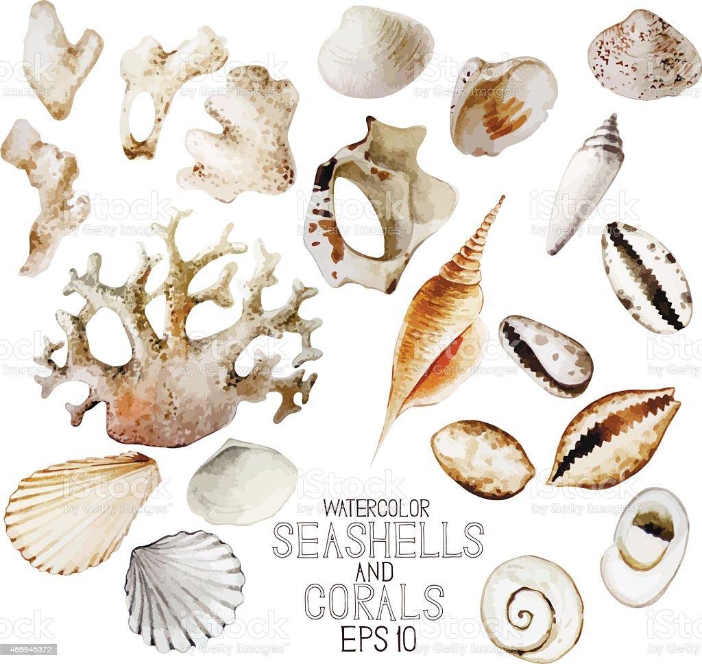 Watercolor conchas e corais - ilustração de arte em vetor