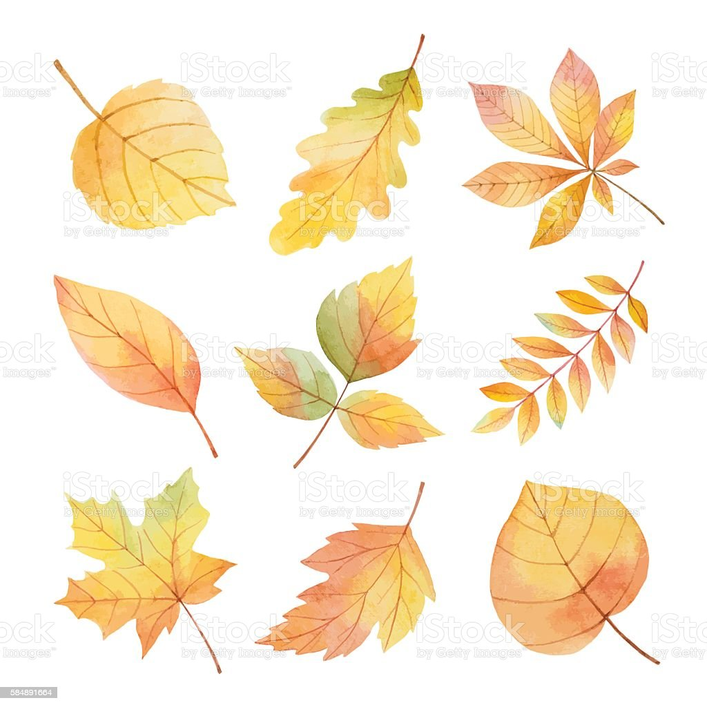 Watercolor set autumn leaves on a white background. vector art illustration
