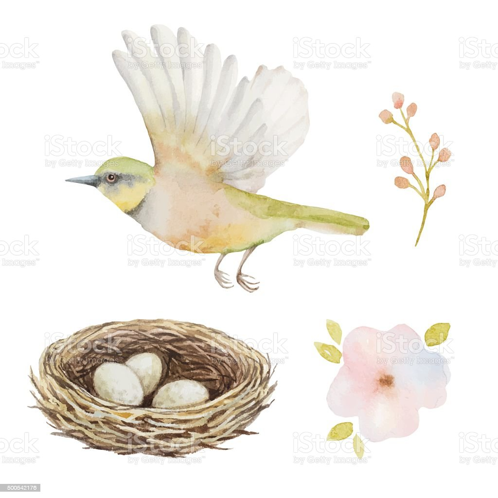 Watercolor set of bird and nest with eggs. vector art illustration