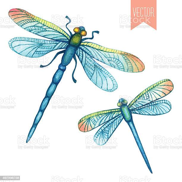 Watercolor set of dragonflies vector id492396238?b=1&k=6&m=492396238&s=612x612&h=d g80x cx92ziwgzk1cf1uodeduiooopypprgavmurg=