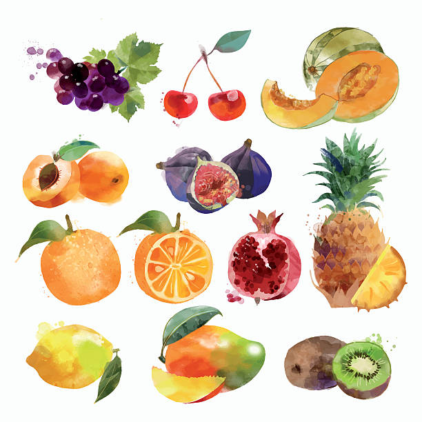 illustrations, cliparts, dessins animés et icônes de set aquarelle de fruits - fruit