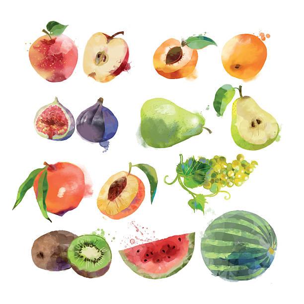 水彩のフルーツ - 果物点のイラスト素材/クリップアート素材/マンガ素材/アイコン素材