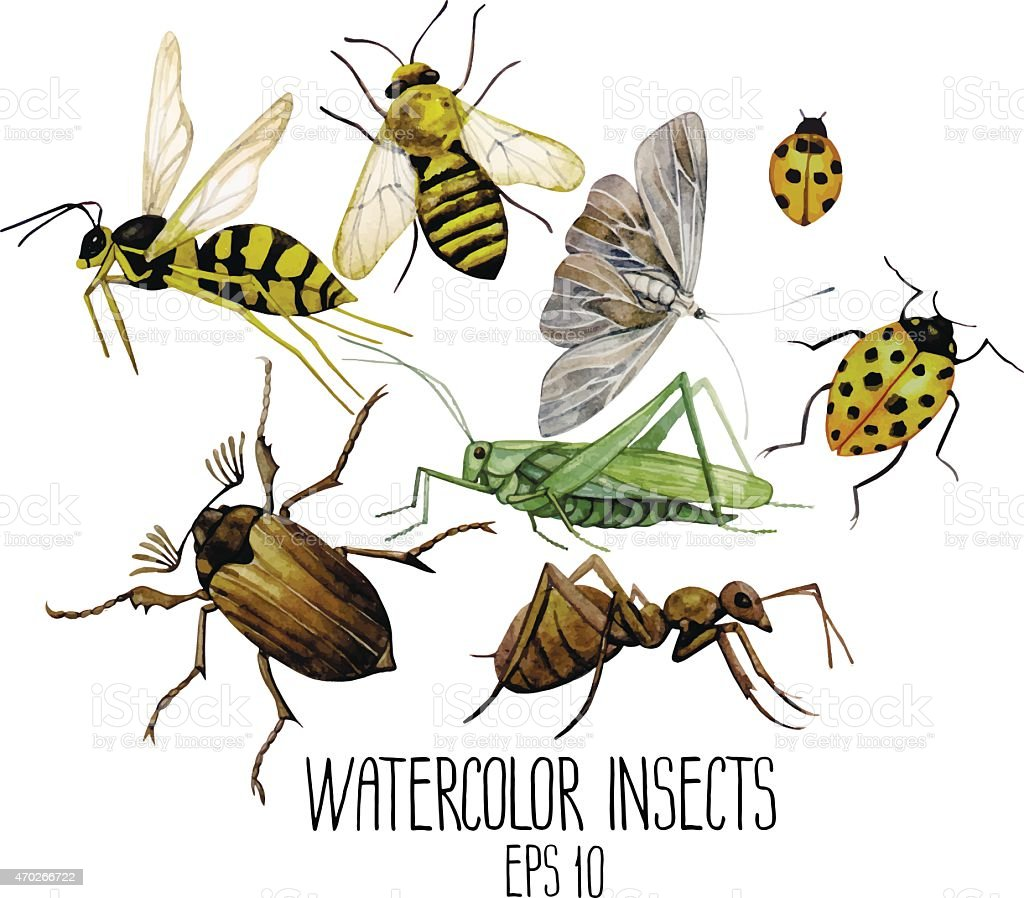 Watercolor set of insects vector art illustration
