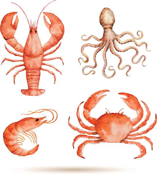 bildbanksillustrationer, clip art samt tecknat material och ikoner med watercolor set of seafood. - krabba