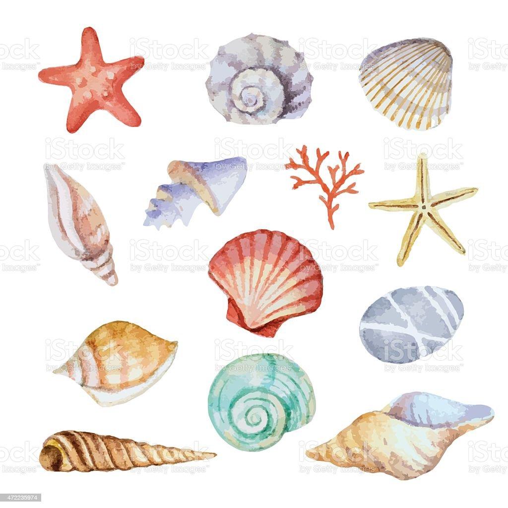 Watercolor set of seashells vector art illustration