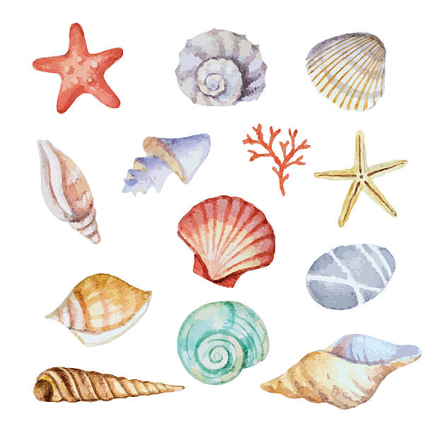 stockillustraties, clipart, cartoons en iconen met watercolor set of seashells - zeeschelp