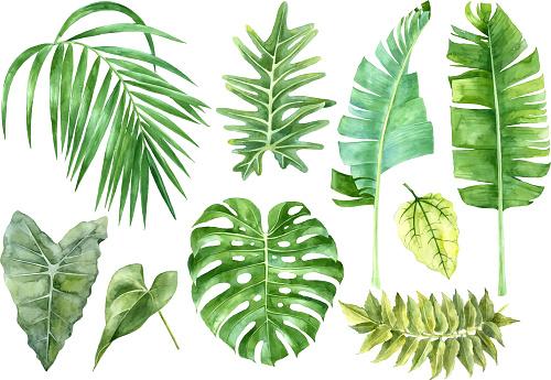Suluboya Tropikal Yaprakları Ayarla Stok Vektör Sanatı & Arka planlar'nin Daha Fazla Görseli