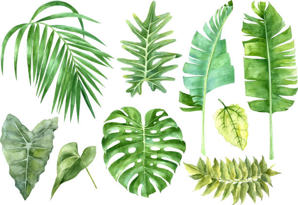 illustrazioni stock, clip art, cartoni animati e icone di tendenza di watercolor set of tropical leaves - foglie