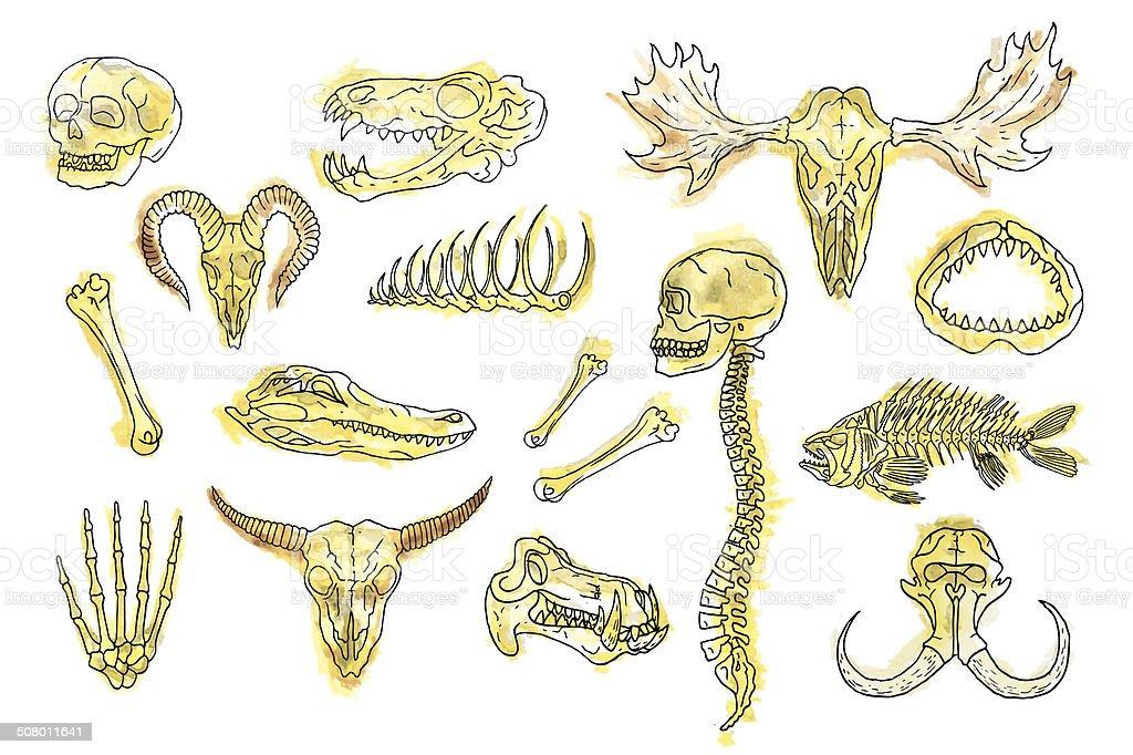 Ilustración de Acuarela De Cráneo Y Los Huesos y más banco de ...