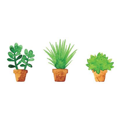 Watercolor Small Pot Plants