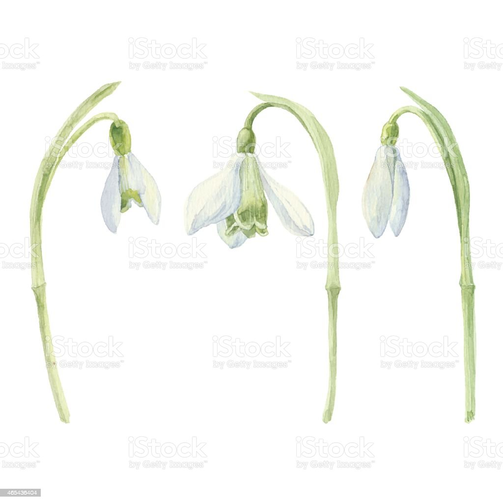 Watercolor snowdrop set.