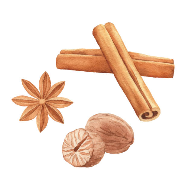 Watercolor Spices Vector illustration of spices. star anise on white stock illustrations