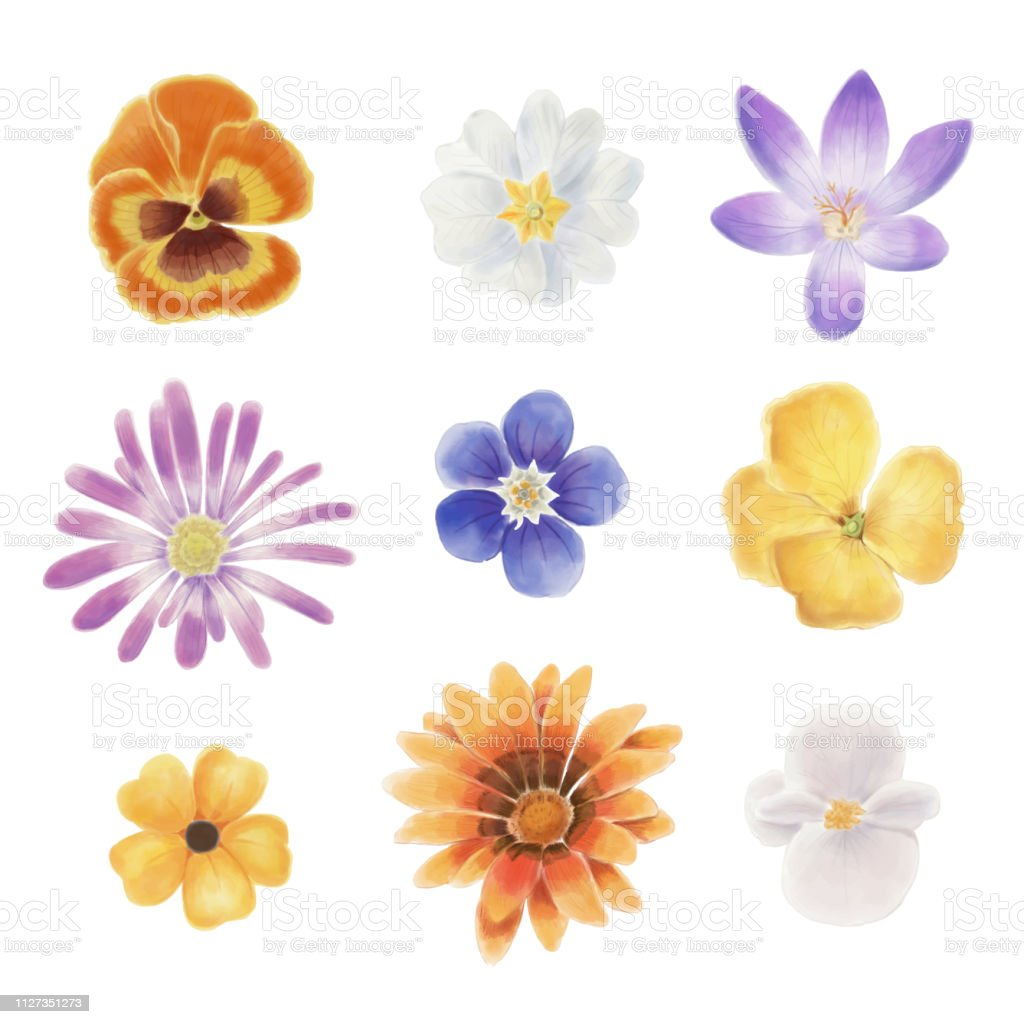 Watercolor Spring Flowers Stock Illustration Download Image Now Istock