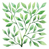 Vector illustration of Green Plant.