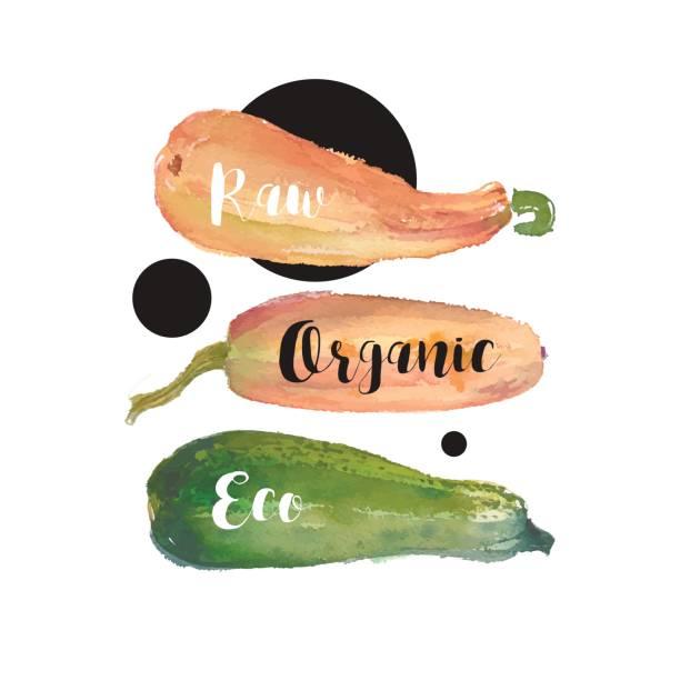 aquarell squash gemüse illustration für frische icon-design, poster für restaurant, banner für vegan shop, markt. - flaschenkürbis stock-grafiken, -clipart, -cartoons und -symbole