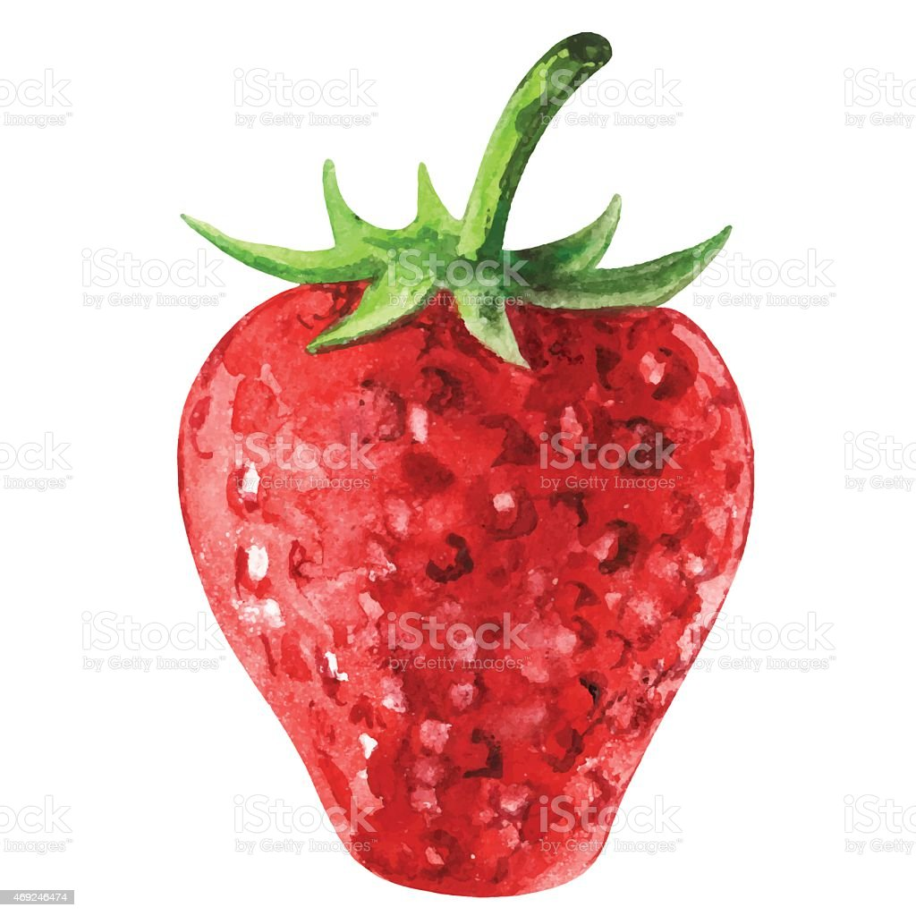 Watercolor strawberry closeup isolated vector art illustration