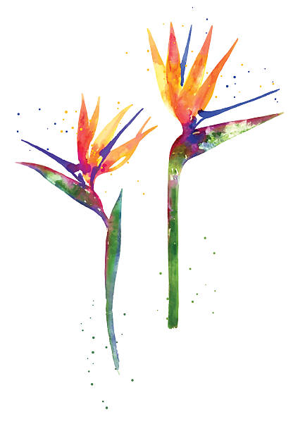 Watercolor Strelitzia flower Rainbow watercolor