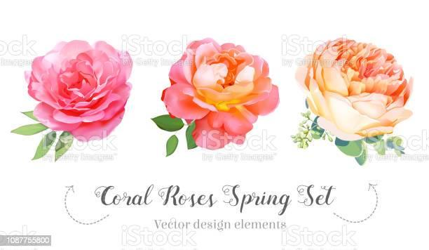 Watercolor style coral garden roses spring set vector id1087755800?b=1&k=6&m=1087755800&s=612x612&h=x2yfqk8ryryfqjb spyhe9vt6jjmcnxe0lfljpdukqc=