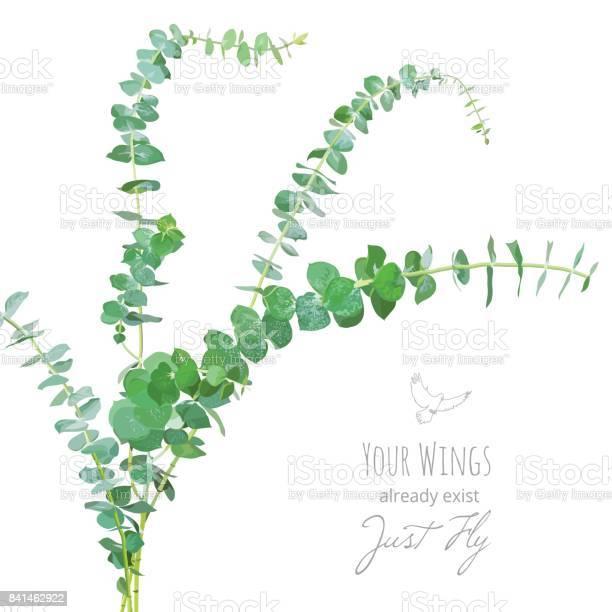 Watercolor style eucalyptus branches bouquet vector id841462922?b=1&k=6&m=841462922&s=612x612&h=9qtrlamkn5pbeu9cmesvqvzmdntk6shmyhwbs0laeoc=