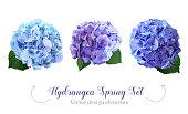 水彩風紫陽花の花セット