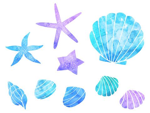 Watercolor style illustration set (shellfish, starfish)