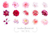 Watercolor style various flowers set. Coral, pink, fuchsia red, white colored. Vector illustration for simple, spring floral wedding design. Elegant decorations. Elements are isolated and editable