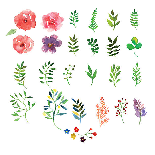 aquarell struktur - rosenpflanzen stock-grafiken, -clipart, -cartoons und -symbole