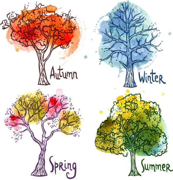 zestaw drzew akwarelowych - four seasons stock illustrations