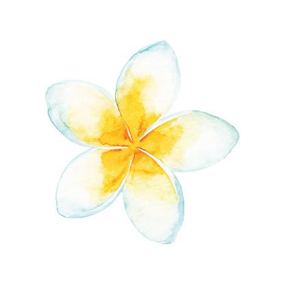 Acuarela tropical flor