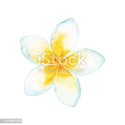 Vector illustration of tropical flower.