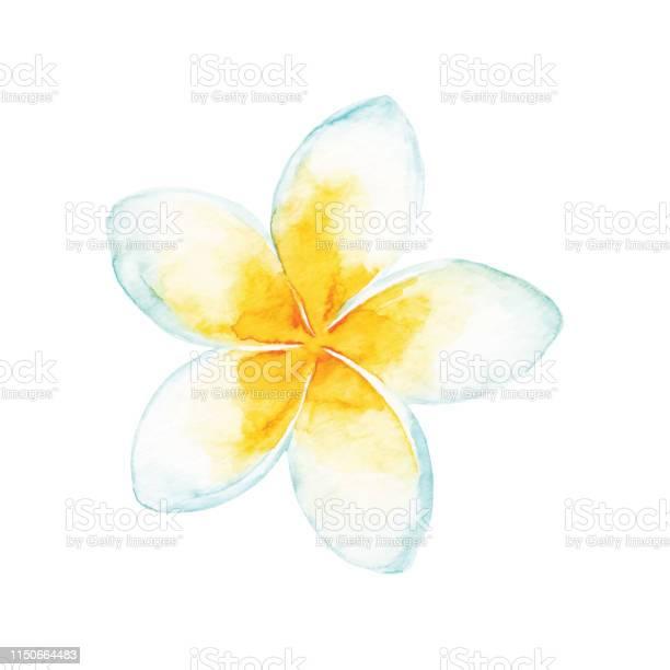 Watercolor tropical flower vector id1150664483?b=1&k=6&m=1150664483&s=612x612&h=3voagjy6cp5vyzsloccqr3kmirutib6jevtp0olbszg=