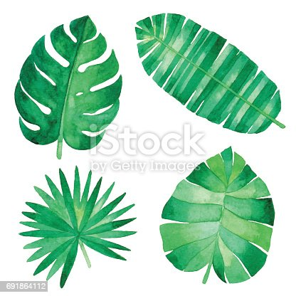 istock Watercolor Tropical Leaves 691864112